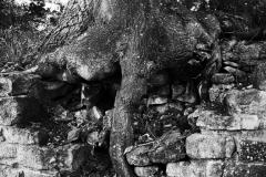 Ruine Disibodenberg